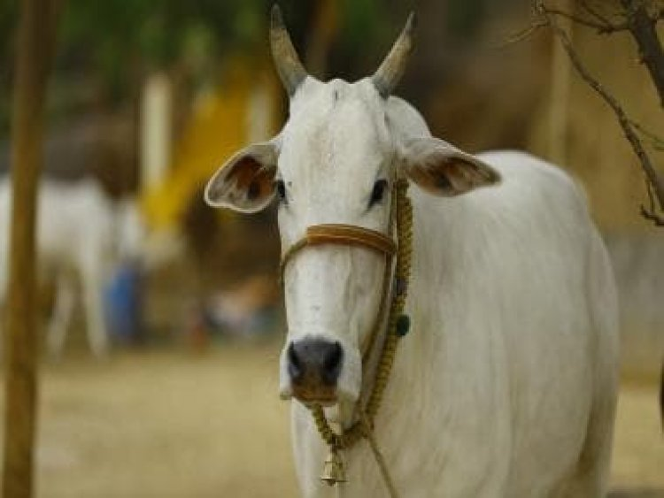National 'cow science' exam for students, general public to be held on 25 February, annually