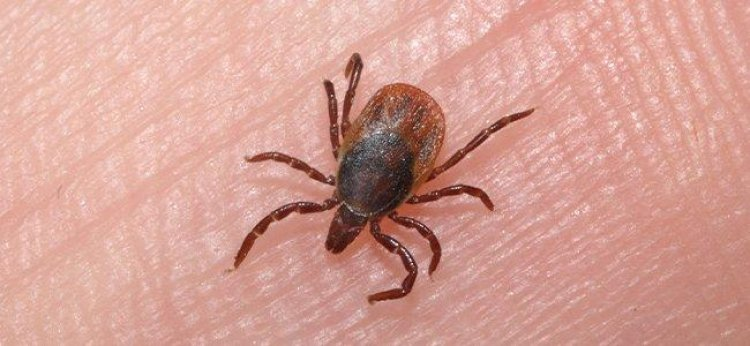 What To Do When The Ticks Bite In Baltimore