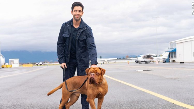 'Turner & Hooch' goes to the dogs