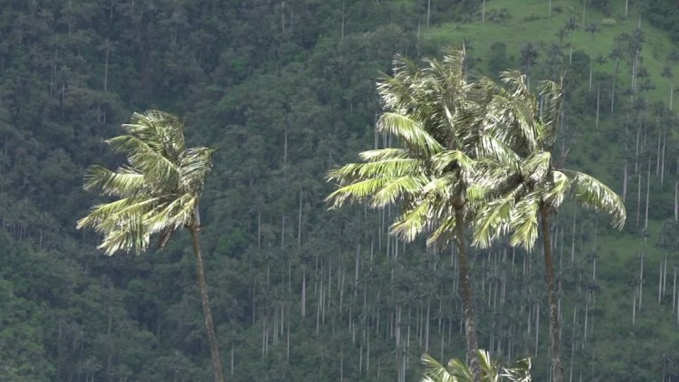 Palm trees growing in an unexpected place