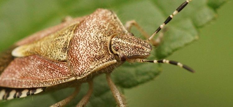 How To Keep Stink Bugs Out Of Your Maryland Home This Fall